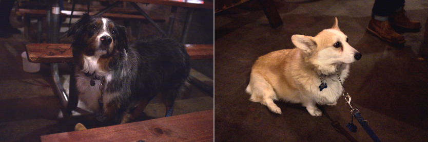 Two dogs at the Lucky Lab Brew Pub.